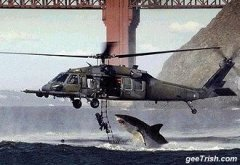 choppershark.jpg